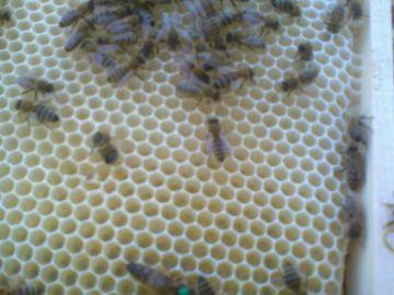 Včelí oddělky v nových úlech a kočovný vůz