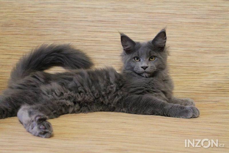 Mladá drobná kočička