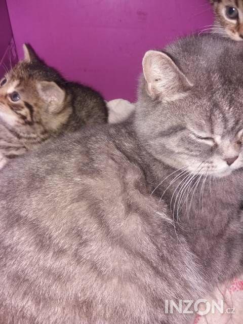 Mladé malé kočička fotky
