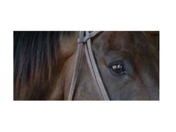 Zastavte zneužívání koní!